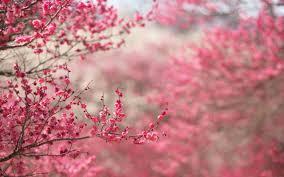 primavera1