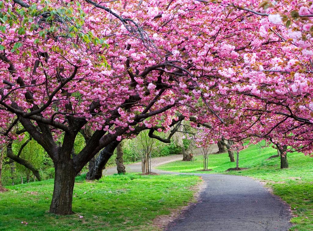 Prati oltre il cancello for Immagini primavera desktop