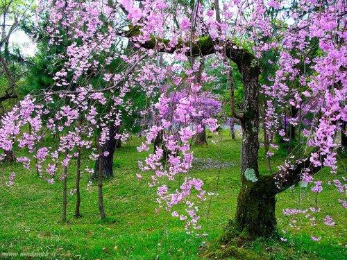 primavera17