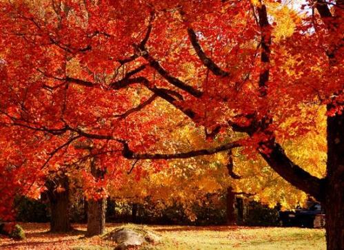 autunno ottobre