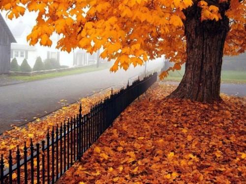 autunno10