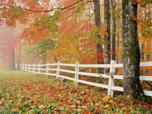 autunno 5