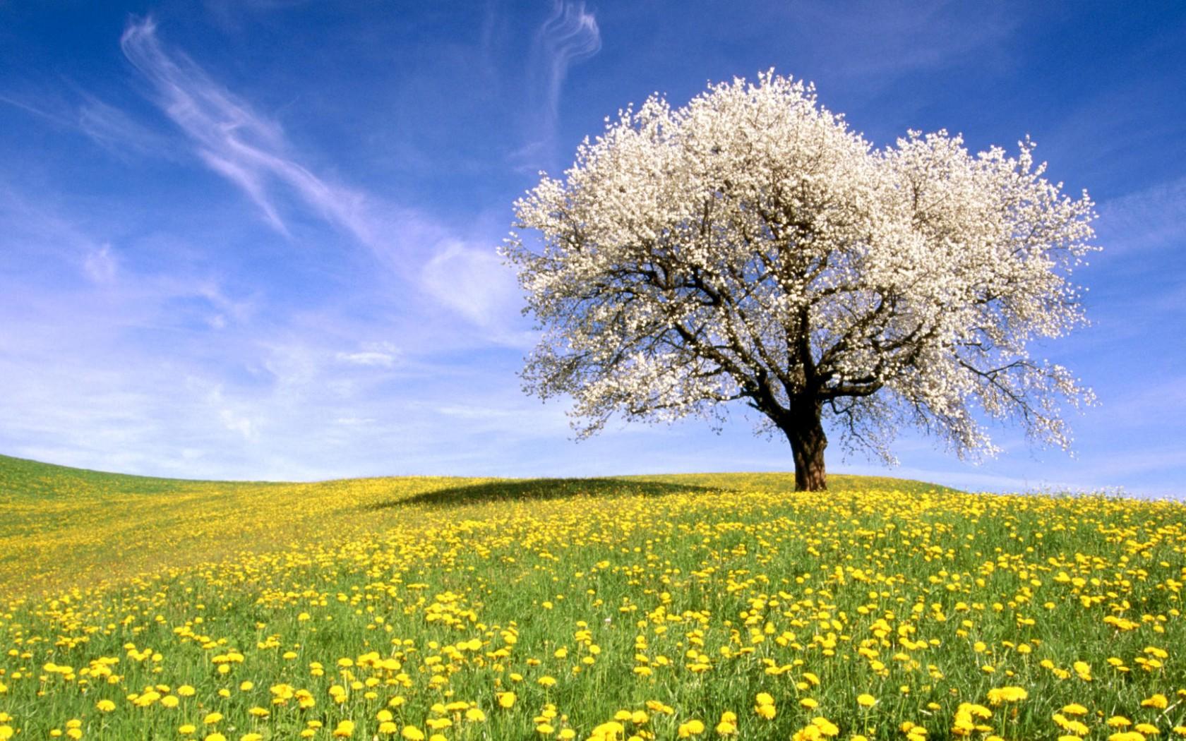 sfondi desktop primavera prati - photo #38