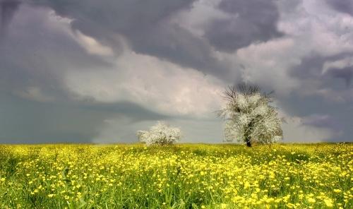 primavera  corrado  ferrari