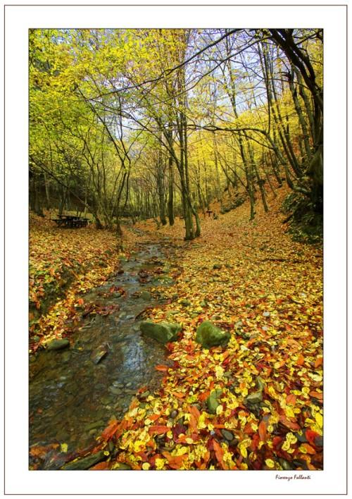 autunno22
