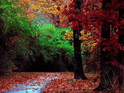autunnof
