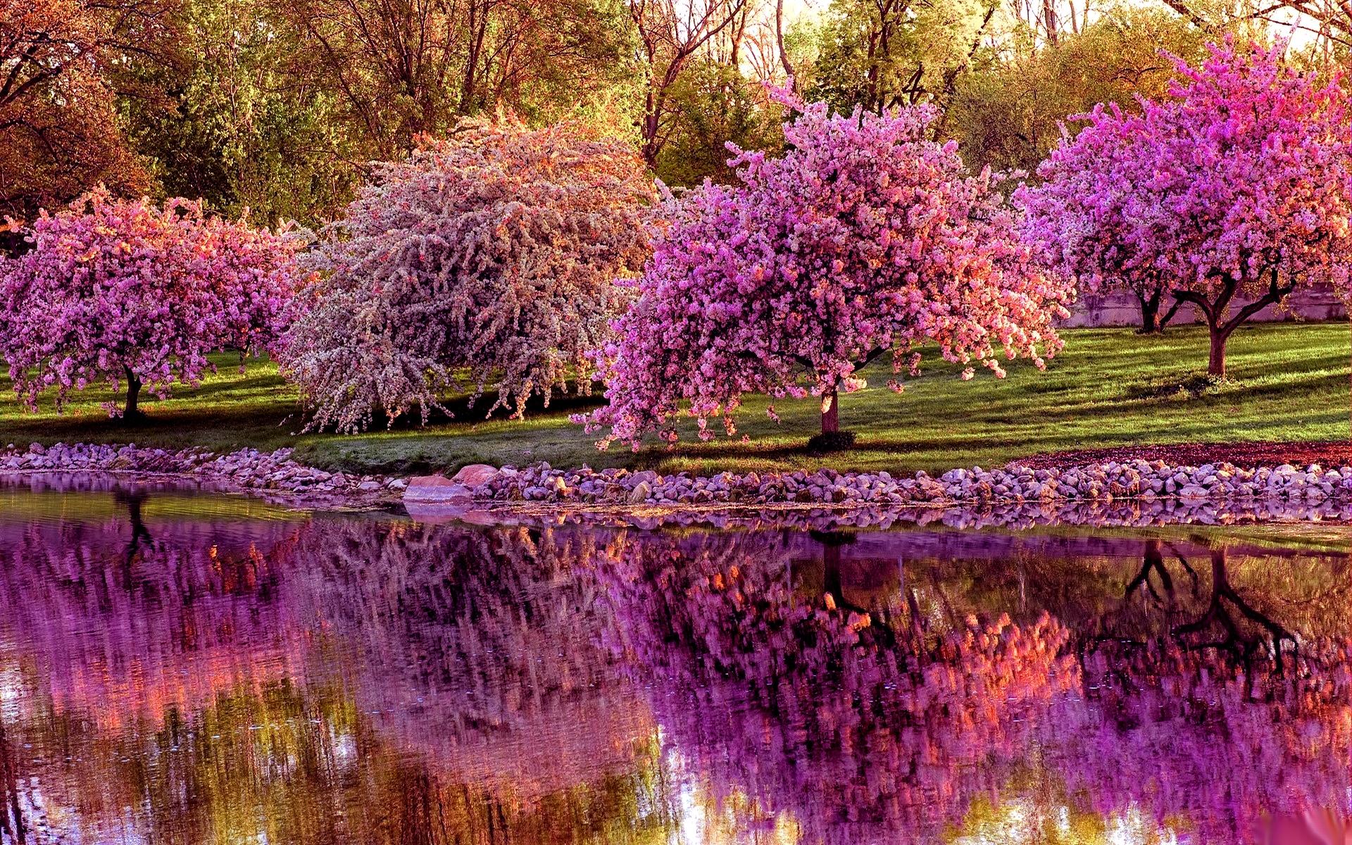 Speranze a primavera oltre il cancello for Immagini desktop primavera