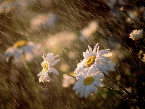primavera pioggia