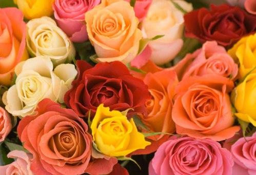 rose-colorate