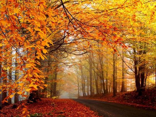 autunno31