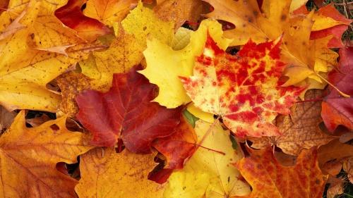 le_foglie_autunno