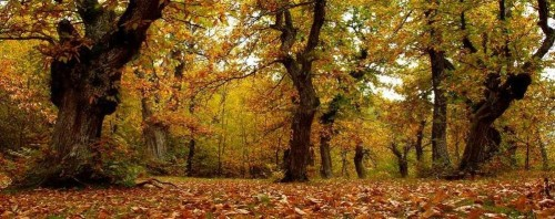 meteo-e-proprio-autunno-nuvole-pioggia-e-primi-freddi-per-tutto-il-weekend_4010db14-6915-11e5-a376-1cafd3749e80_998_397_big_story_detail