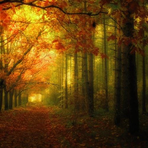 bosco-autunno