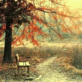autunno-malinconico-autunno-foglie-dormire-cambio-stagione-perchè-blog-non-si-dice-piacere-buone-maniere-galateo