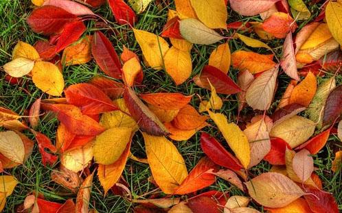 Sfondi desktop autunno 19 oltre il cancello for Autunno sfondi desktop