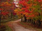charles-sleicher-country-road-in-the-fall-vermont-usa_a-G-3683467-4990875