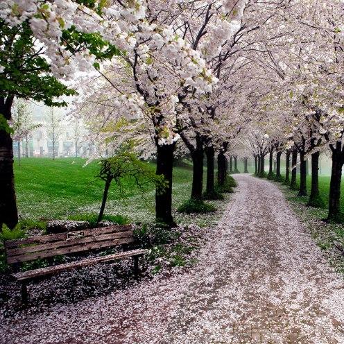 primavera29