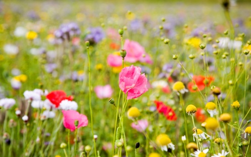 summer-flowers-wallpapers-40
