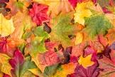 autunno2