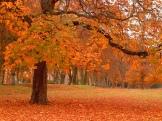 letture-autunno
