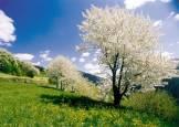 primavera13