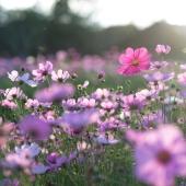 Le-piante-che-fioriscono-in-primavera