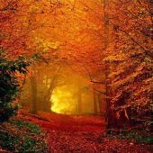 be2715f44655ec4a4ca1586cf74d5936--autumn-leaves-autumn-fall