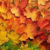foglie3