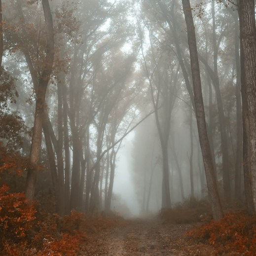 nebbia autunnale2