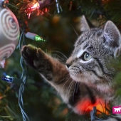 ferplast-gatto-albero-giochi-natale-albero-regali