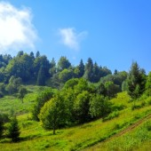 summer-sunny-hillside-country-road-thick-green-grass-different-trees-bushes-cloud-blue-sky_356860-269