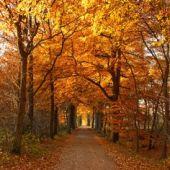 9a4e164f7db48a90d4f794892c796b46--high-road-fall-photography
