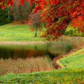 albero-autunno-nei-pressi-di-un-piccolo-stagno-sfondo-640x1136_163
