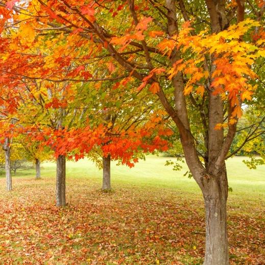 autumn-free-in-park-1549542994PfQ