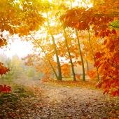 autumn-leaves-forest-osen