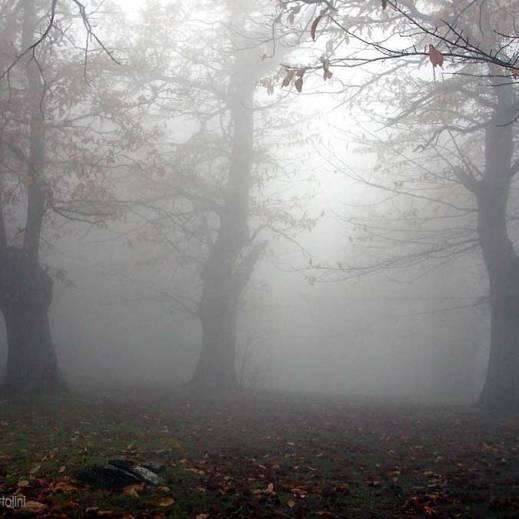 nebbia-1