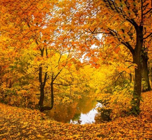 sfondi-autunno-desktop-16
