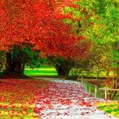 sfondi-autunno-desktop-18