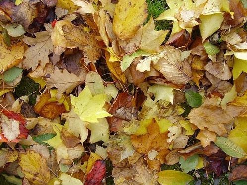 sfondi-desktop-autunno-17